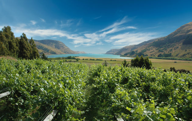 LakeForsythVineyard, Canterbury WATER-0-630-0-399