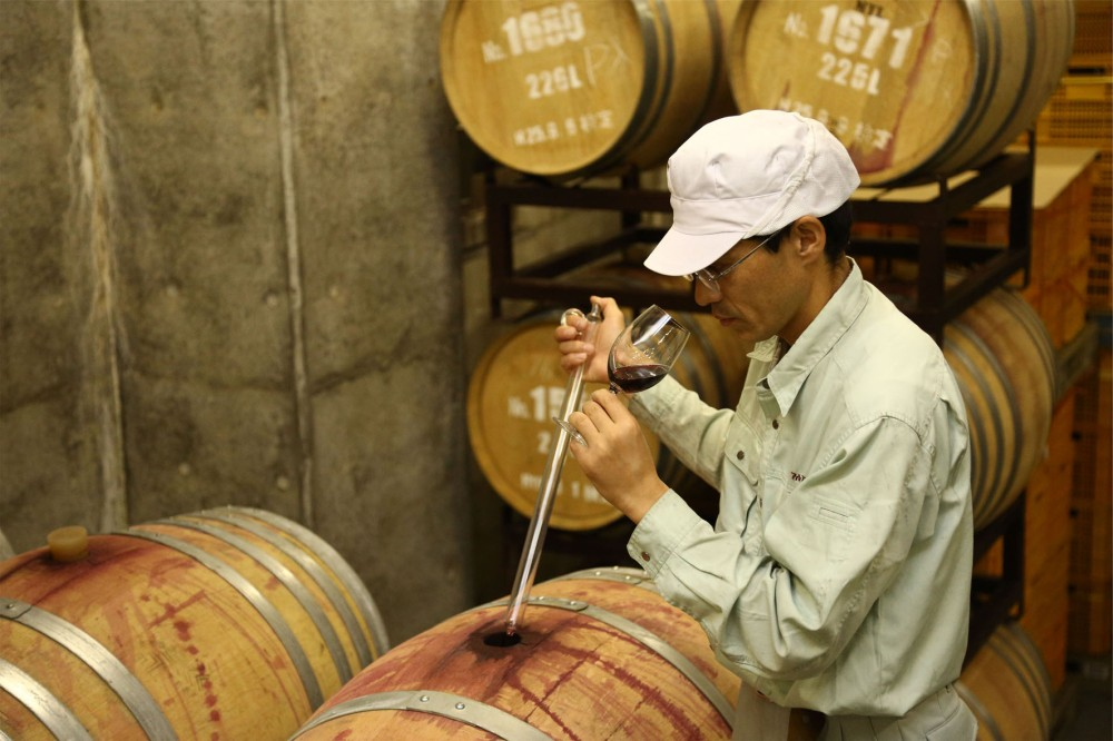 P16. APLS 阿爾卑斯葡萄酒莊 釀酒過程