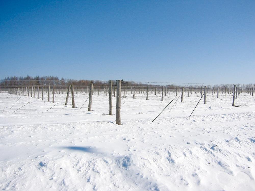 P32. 十勝葡萄莊 冬季農園